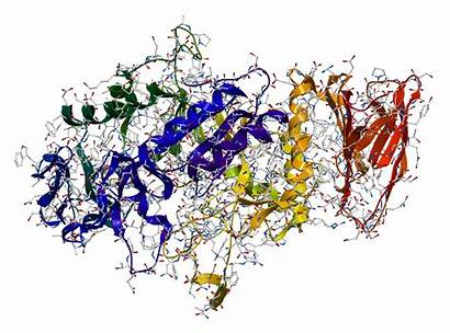 Enzyme Amylase Enzymes Starch Examples Function Definition