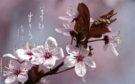 japanische kalligraphie hintergrundbilder wallpaper die