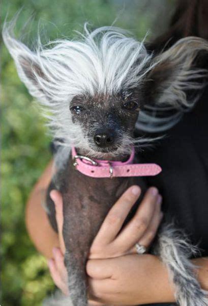 ugliest dog contest  pics izismilecom