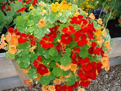 seed saving  july august  bloomin garden