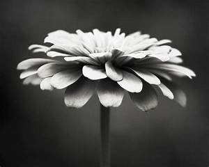 Black and White Photography floral photography flower