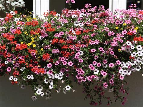 Blumen Für Sonnenbalkon by Ferienwohnung 5 Landhaus Deiser Oberstdorf Firma