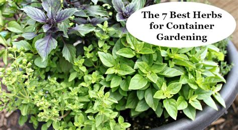 The 7 Best Herbs For Container Gardening