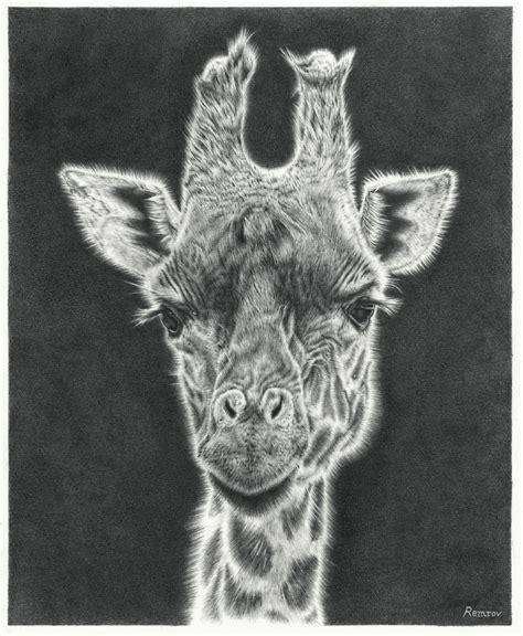 giraffe drawing time lapse remrovs artwork