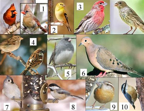 wild birds unlimited common michigan birds i can see at