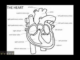 Images for easy way to draw heart diagram 1hot6code0 hd wallpapers easy way to draw heart diagram ccuart Images