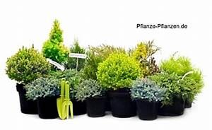 Winterharte Pflanzen Liste : balkonpflanzen winterhart pflegeleicht ~ Michelbontemps.com Haus und Dekorationen