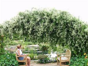 Arbres A Pousse Tres Rapide : vis vis tr s g nant jardizone ~ Premium-room.com Idées de Décoration