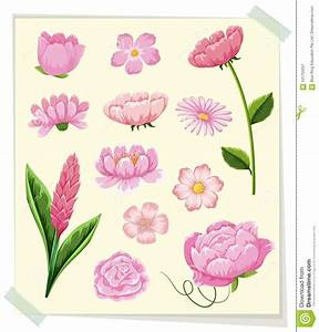 Different Types Of Pink Flowers Stock Vector ...