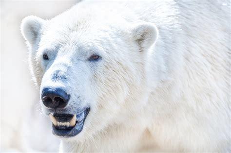 tingly facts  polar bear  kids  love  read
