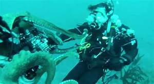 Video: Attack of the Giant Octopus