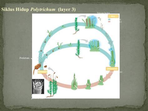 biologi plantae