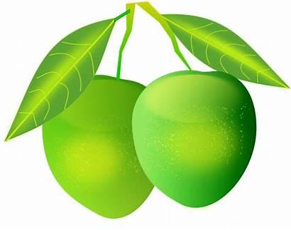 Mango Clipart Fruit Clip Mangos Transparent Tree