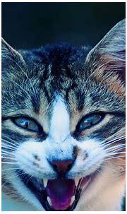 [44+] Cool Cat Wallpapers on WallpaperSafari