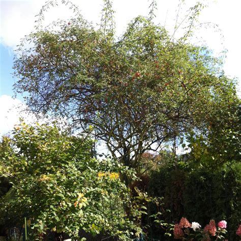 Herbst Gartenarbeit by Gartenarbeiten Im Herbst Gardennewbees