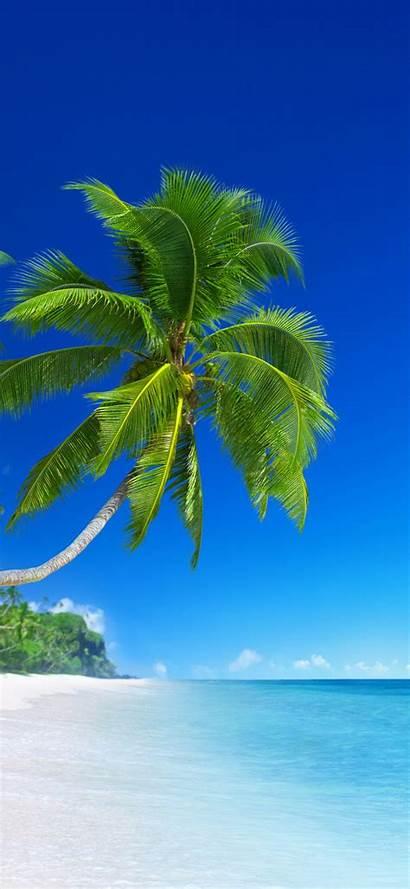 Tropical Beach Phone Wallpapers Coconut Tree Phones