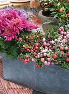 Comment Remplir Une Grande Jardinière : balconniere automne hiver pivoine etc ~ Melissatoandfro.com Idées de Décoration