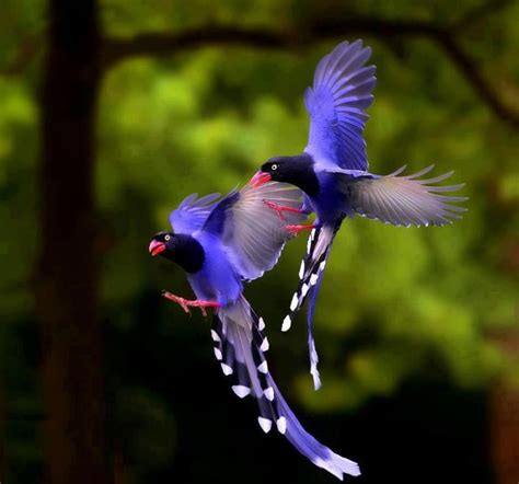 pictures birds beauty  nature