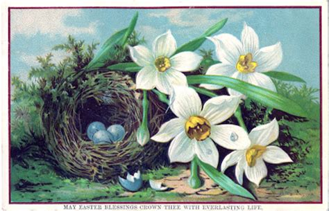 royalty  easter image nest  eggs daffodils