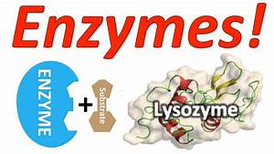 Enzymes  Mr  W U0026 39 S Enzyme Song