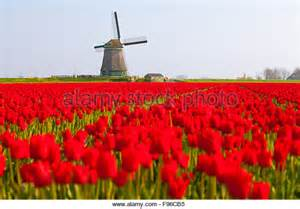 Holland Windmills and Tulips Fields