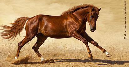 hanf und hanfoel fuers pferd