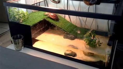 aquarium tortue d eau douce plongeon de tortue d eau