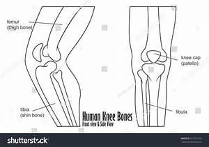 Human Knee Bones Front Side View Stock Vector 412015252