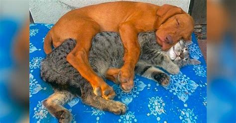 cats  dogs    friends