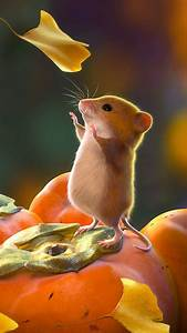 Download, Wallpaper, 1080x1920, Mouse, Rodent, Cute, Leaves
