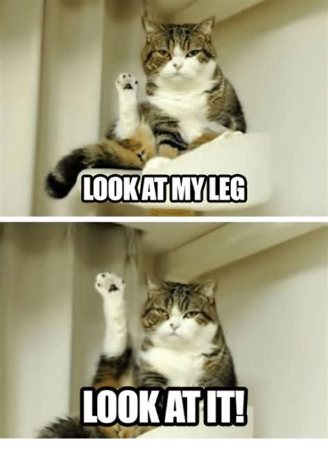 Look At This Meme - look atmyleg look atit grumpy cat meme on sizzle
