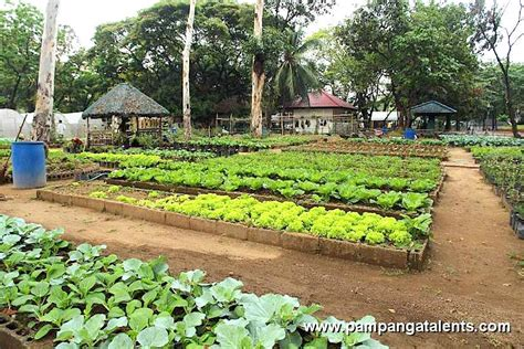 The Importance Of Urban Gardening