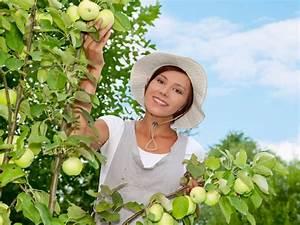 Wann Apfelbaum Pflanzen : apfelbaum schneiden ~ Lizthompson.info Haus und Dekorationen