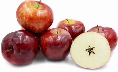Apple Apples Rome Facts Manzana Trans Inc
