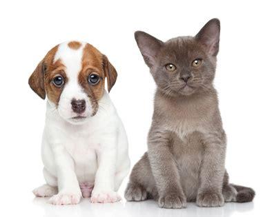 chambre d agriculture vend馥 les conditions de vente des animaux domestiques fiches conseils générales