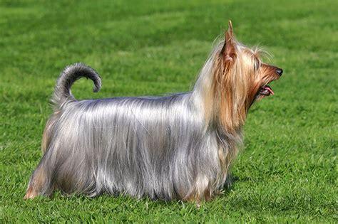 github sakshamdog breed classification stanford dog