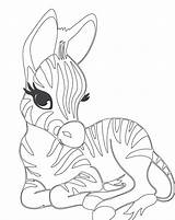 Zebra Coloring Sheets Drawing Zebras Printable Animal Head Clipart Getdrawings Getcolorings Colo Coloringfolder Tech sketch template