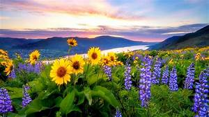Spring Flowers Mountain Lake Hills Red Cloud Sunset Hd ...