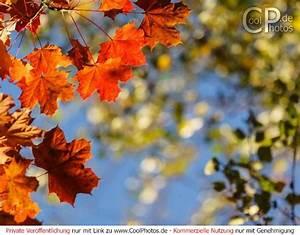 Bilder Herbst Kostenlos : fotos motive oktober 2017 ~ Somuchworld.com Haus und Dekorationen