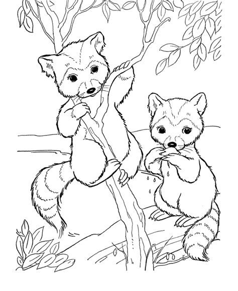 wild animal coloring pages bandit face raccoon coloring