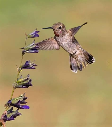 what is the only bird that can fly backwards hummingbird fly in feeding for a lunch hummingbirds are the only birds that can hover
