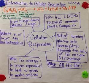 Mrs  Paul - Biology  10th Grade Biology Notes