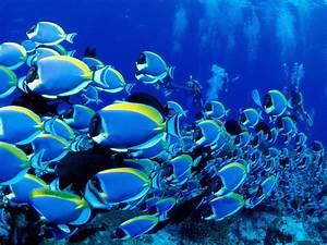 Ocean Life Desktop HD Wallpaper Animals Wallpapers