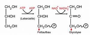 Chemie Mol Berechnen : fettabbau ~ Themetempest.com Abrechnung