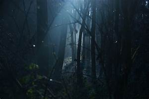 Dark Scary Forest Wallpaper (64+ images)