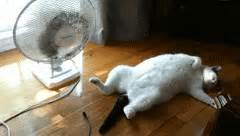 how does a cat stay in heat cat reaction gifs