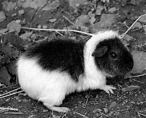 Hund Im Garten Vergraben : was tun wenn ein meerschweinchen stirbt ~ Lizthompson.info Haus und Dekorationen