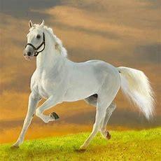 Mehr Als 70 Super Schöne Pferde Bilder