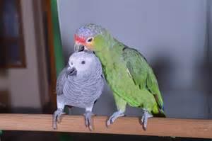 Talking Birds That Talk