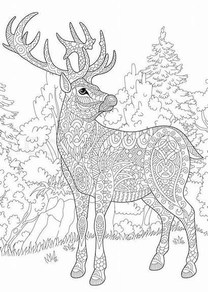 Coloring Pages Among Christmas Reindeer Deer Woodland